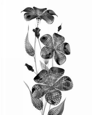 tarifs-marie-ruau